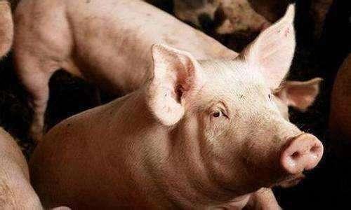 四川省高县发生非洲猪瘟疫情