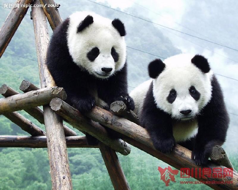 """大熊猫""""吃穷""""美国动物园【图】"""